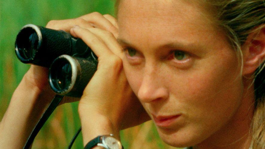 """Tráiler oficial de """"Jane"""", un documental sobre la vida y la labor de Jane Goodall"""