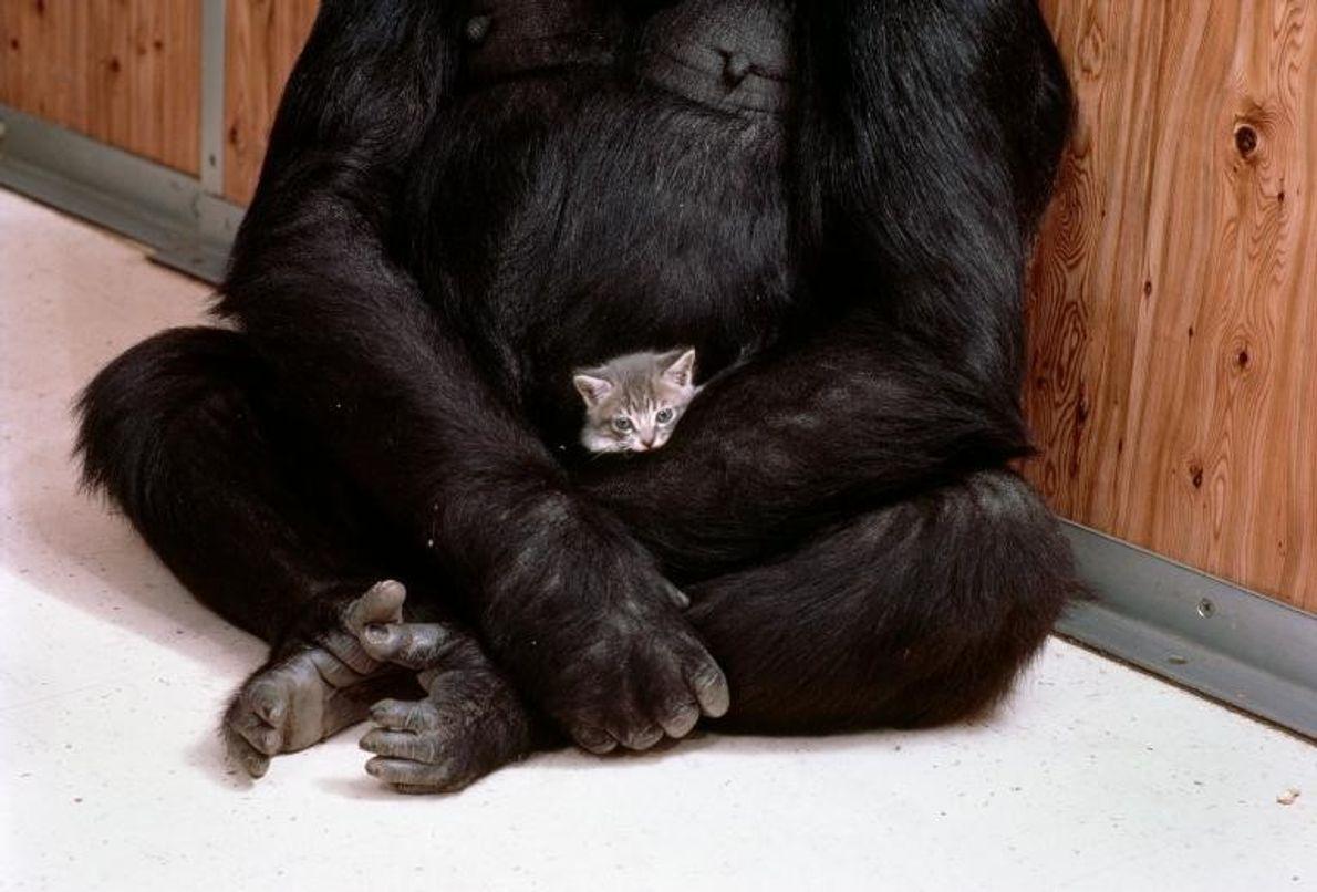 Koko y su gatito