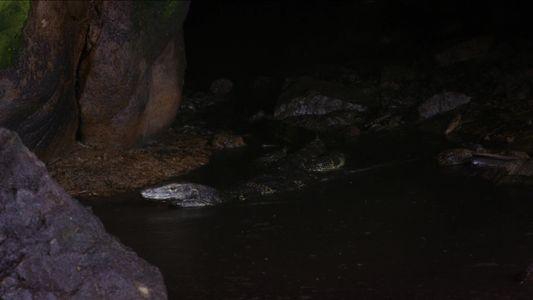 Un varano acuático nada entre guano para devorar a un murciélago