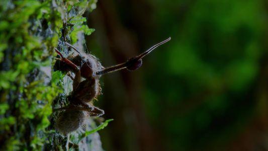 Este hongo parásito controla a los insectos
