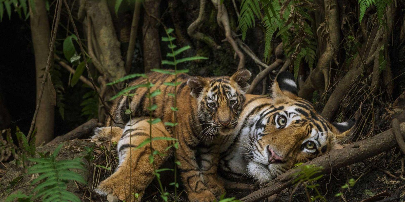 Celebramos el Día de la Tierra recopilando nuestras mejores fotografías de naturaleza
