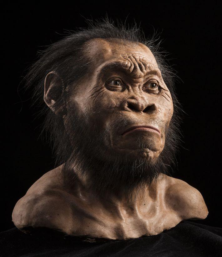 Busto Homo naledi