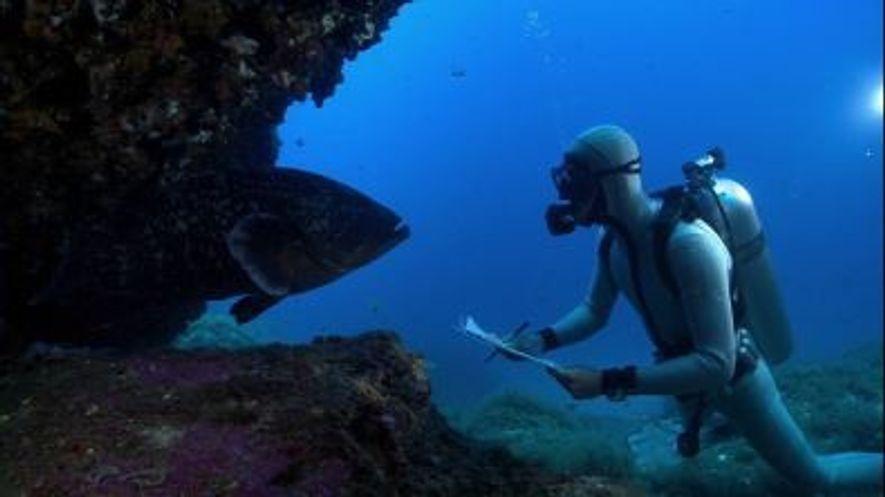 Manuel San Felix - La conservación del mar Mediterraneo