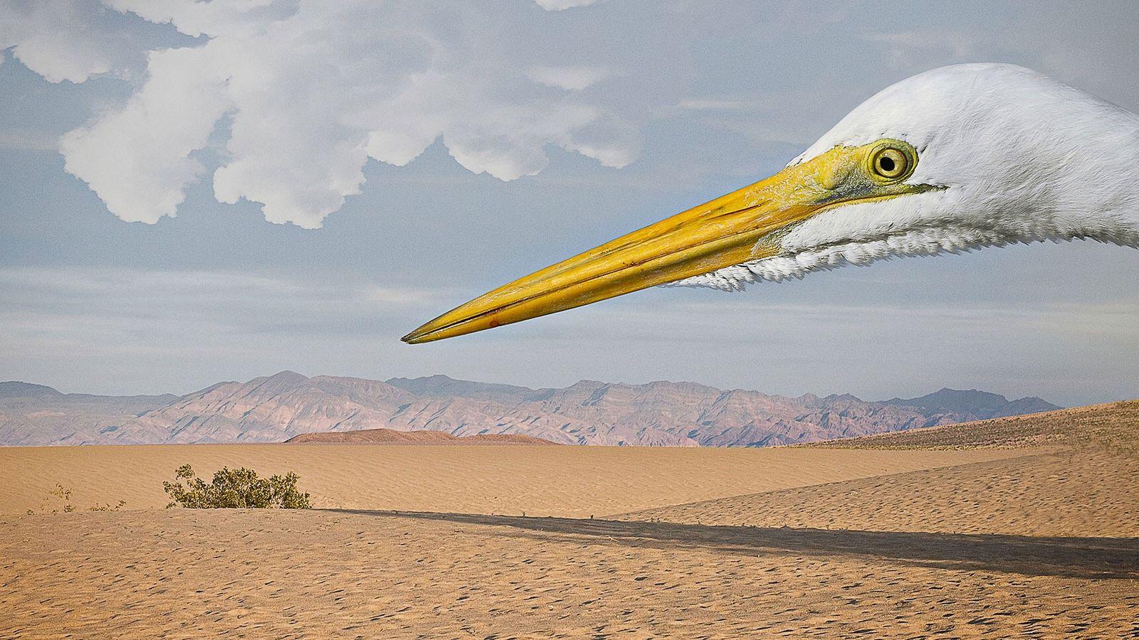 Una garza blanca en el desierto, 2012.