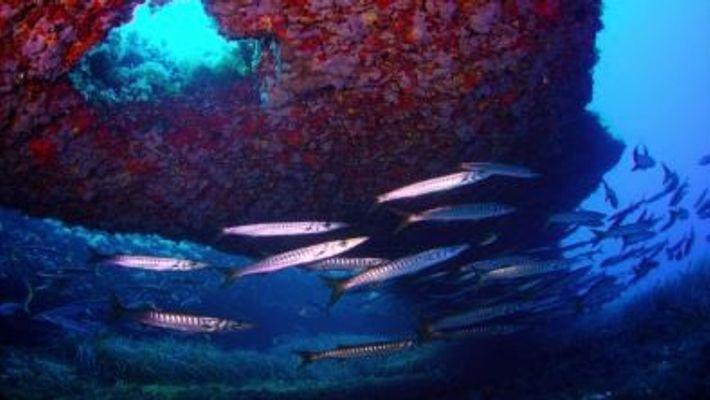 Manuel San Felix - La pesca sostenible