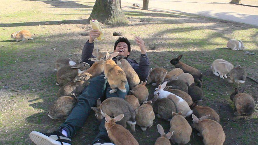 Descubre la isla japonesa donde viven más de 700 conejos