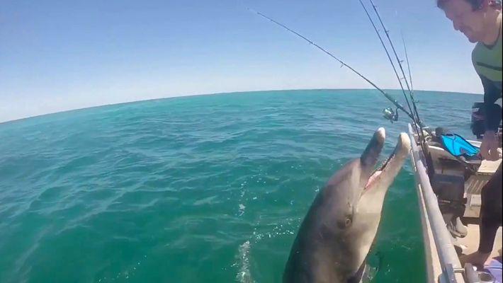 Un delfín salvaje «saluda» a unos humanos, pero ¿es algo normal?
