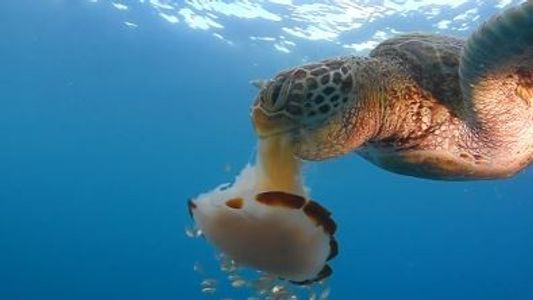¿Tiene alguna ventaja el aumento de la cantidad de medusas?
