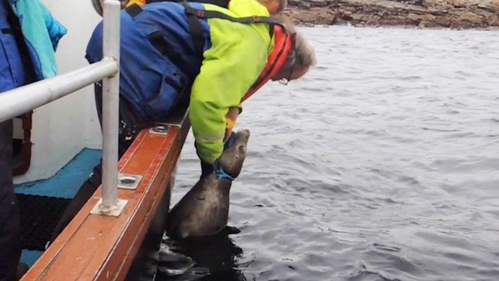 Imágenes del rescate de una foca atrapada en una red de pesca