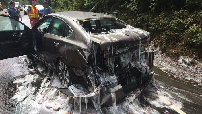 Unos peces bruja cubren de moco una carretera de Oregón