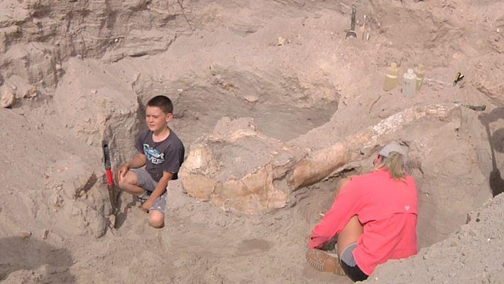 Un niño se tropieza con un fósil de un millón de años mientras hacía senderismo