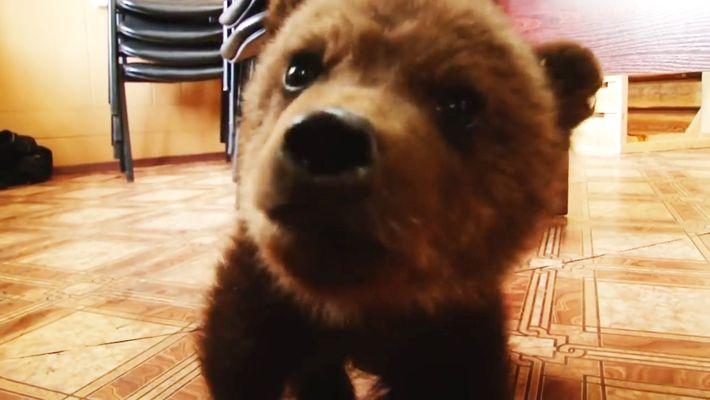 Un osezno de solo 3 meses ha sido rescatado en Rusia