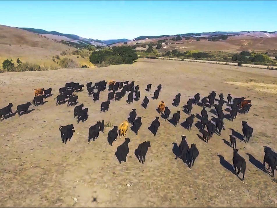 Los drones, utilizados cada vez más en el mundo del pastoreo