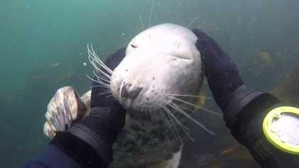 VÍDEO: Esta simpática foca regala a los buceadores una experiencia inolvidable