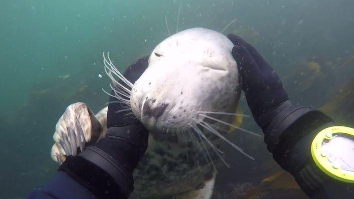 Una foca curiosa se acerca a unos buceadores y deja que la acaricien
