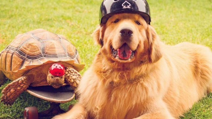 Una tortuga rescatada y un perro se convierten en mejores amigos