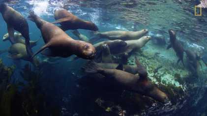 Tres nuevas reservas marinas protegerán más de 750.000 kilómetros cuadrados de océano