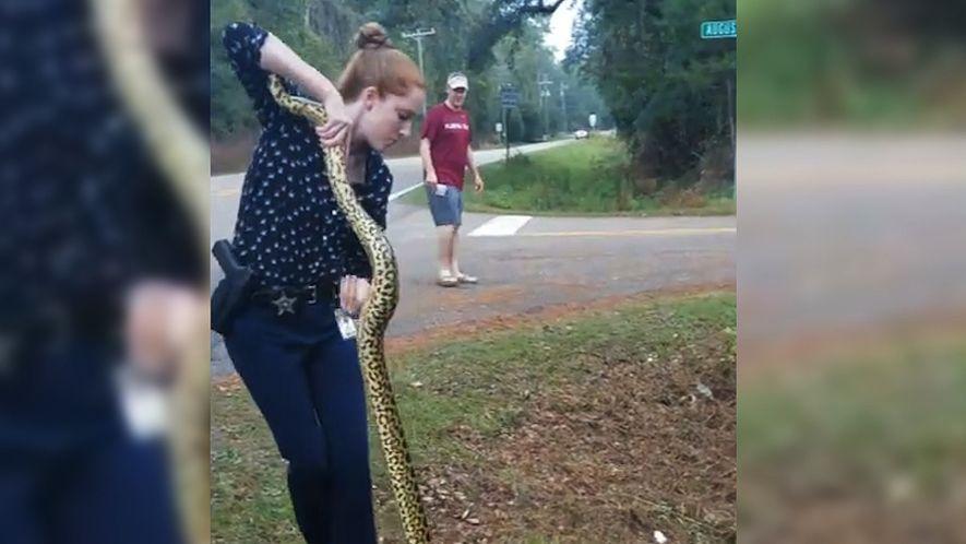 Una hábil detective de Florida consigue atrapar a una pitón de casi 3 metros