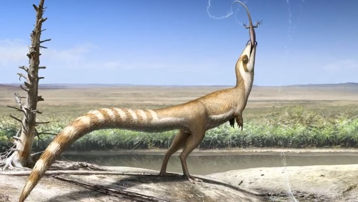 Este dinosaurio del Cretácico podría haberse parecido a un mapache