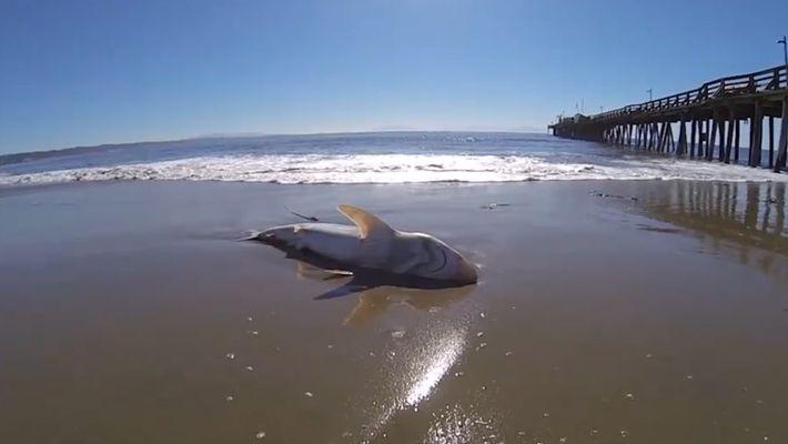 Un parásito es el responsable de la muerte de cientos de animales marinos