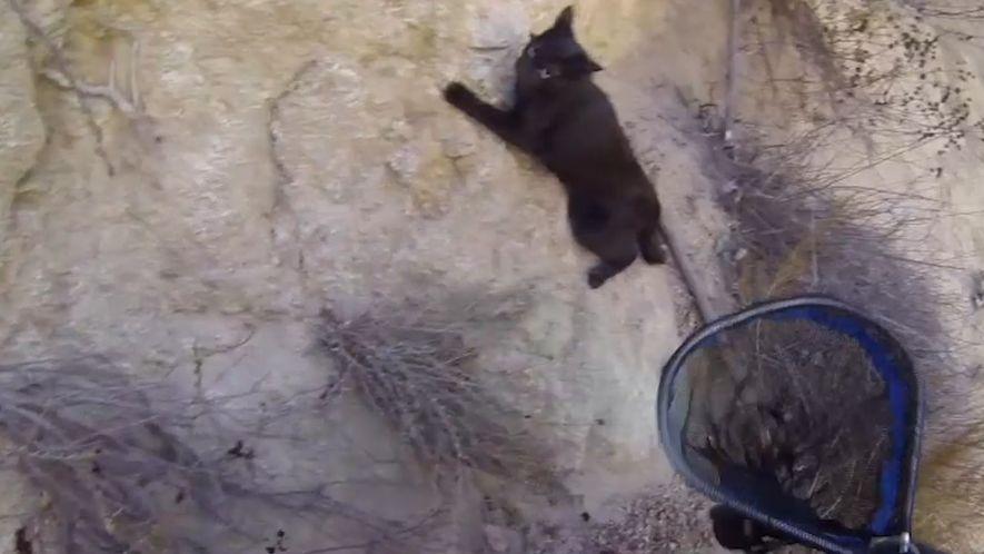 Así fue el rescate de Zion, un gato que había quedado atrapado en un barranco