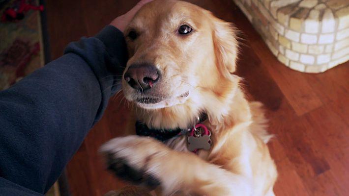 Dueños o desconocidos: ¿a quién prefiere tu perro?