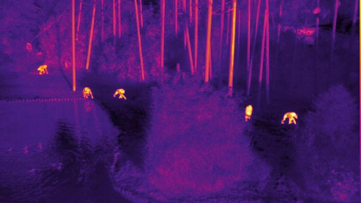 La tecnología infrarroja podría ayudar a combatir la caza furtiva