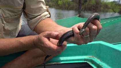 Las serpientes están desapareciendo del lago más grande del Sudeste Asiático