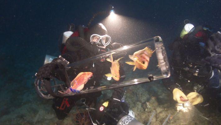 Un nuevo invento mantiene con vida en la superficie a las criaturas abisales