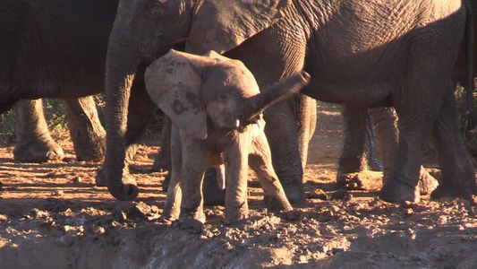 VIDEO: Este adorable bebé elefante gira su trompa como un helicóptero