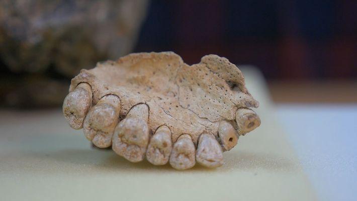 Descubierto en Israel el fósil humano más antiguo fuera de África