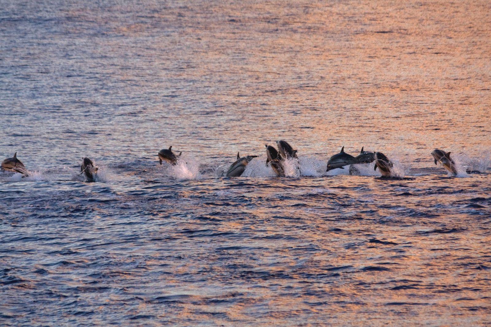 Delfines Mediterráneo virus