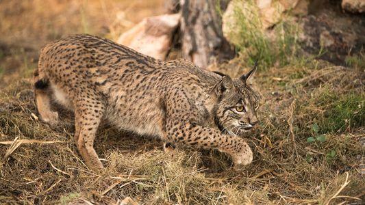 Diez fotografías de National Geographic de la fauna española