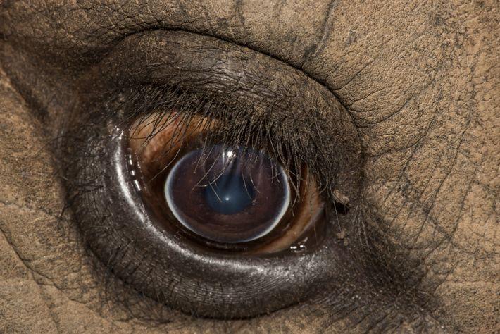 Estos ojos necesitan tu ayuda