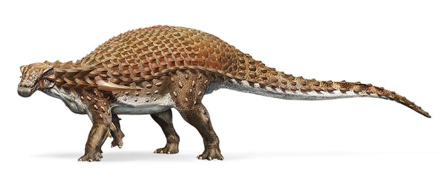 El paleobiólogo Jakob Vinther afirma que el pigmento rojizo llamado fenomelanina cubría gran parte del cuerpo del Borealopelta a excepción de su vientre. De ser así, esta coloración de dos tonalidades podría haber ayudado al Borealopelta a esconderse de los depredadores.