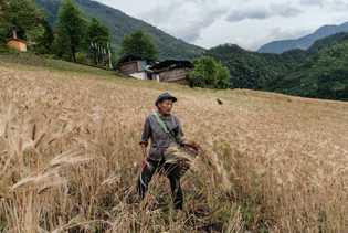 Un granjero cosechando cebada en Chala, uno de los múltiples pueblos fértiles de las orillas del ...