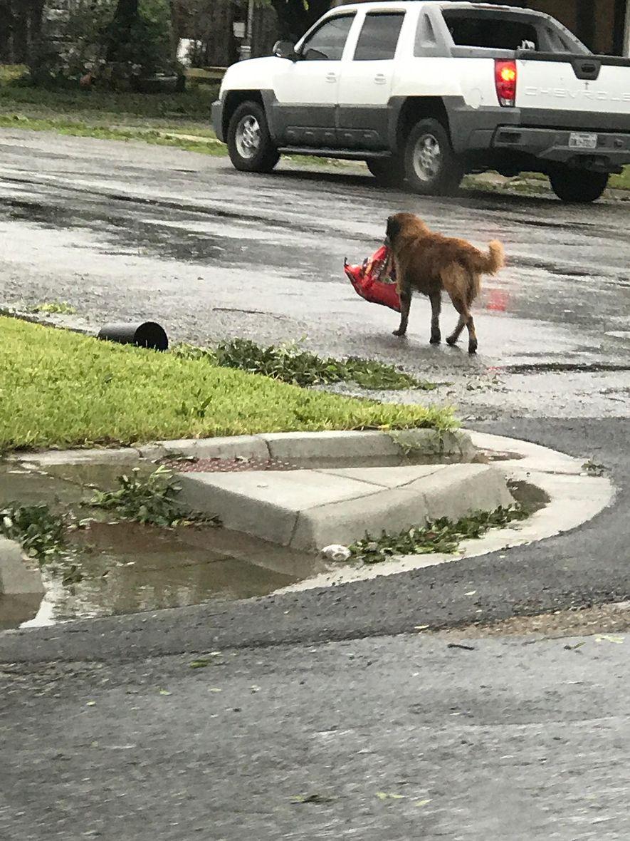 El perro Otis