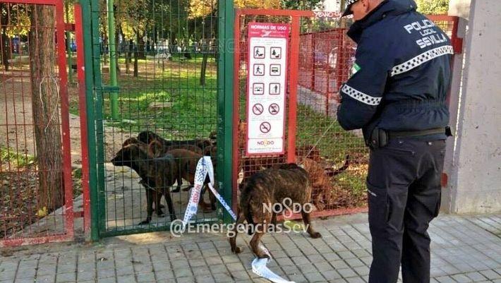 Abandono 18 perros sevilla