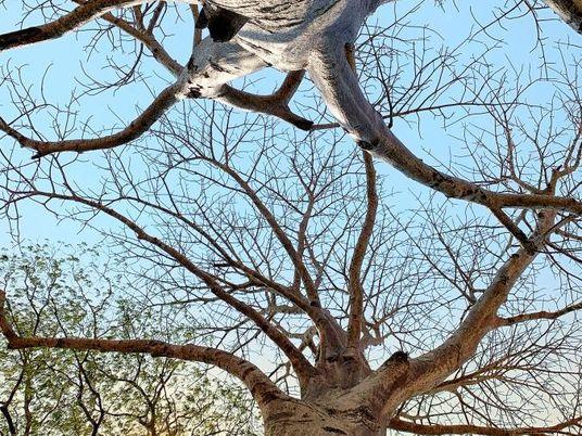 Estos son los árboles que inspiraron al príncipe Enrique a salvar bosques
