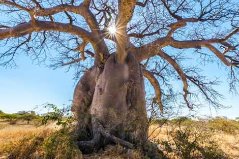 Los árboles que inspiraron al príncipe Harry