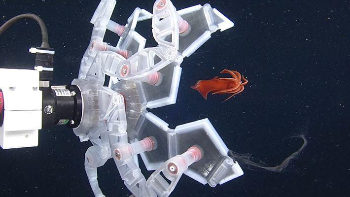 Crean un robot para capturar y liberar ilesas a criaturas marinas