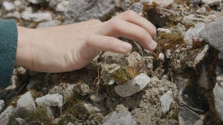 Así se adaptan las especies alpinas al cambio climático