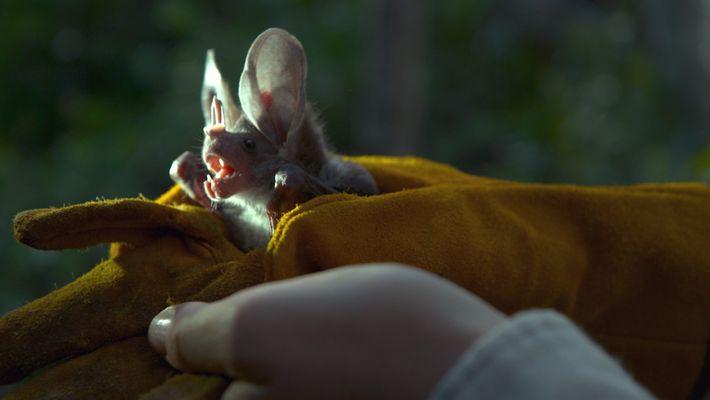 Descubre a los fascinantes murciélagos mexicanos  | Perpetual Planet: México
