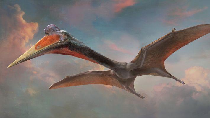 Pterosaurios 101