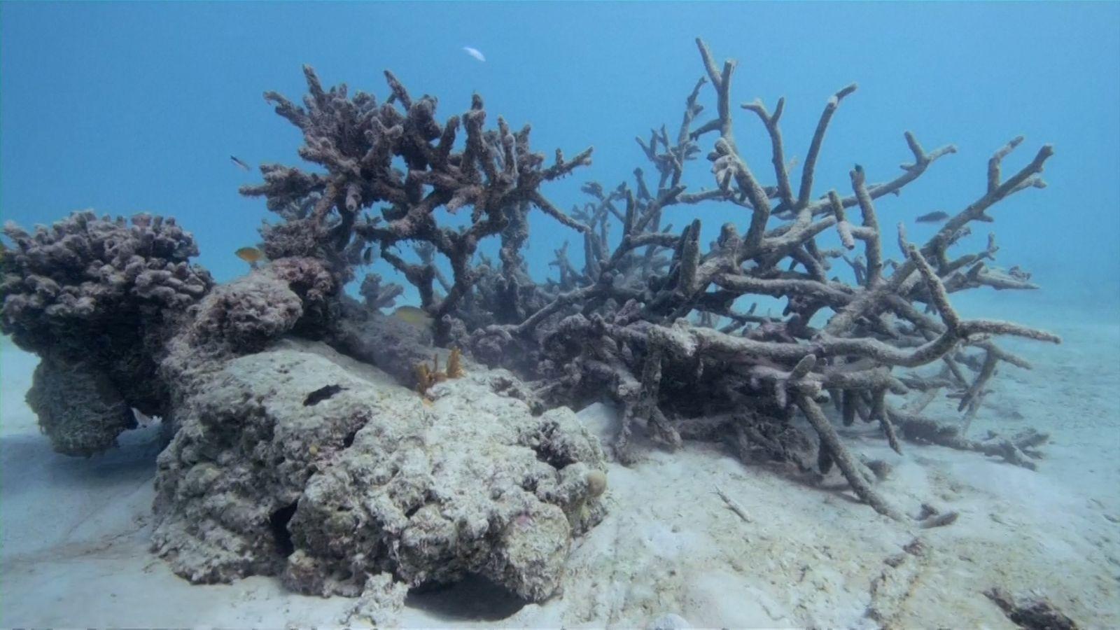 Los arrecifes de coral de la isla samoana de Upolu están muriéndose