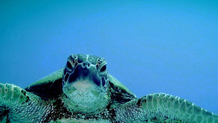 Tortugas marinas 101