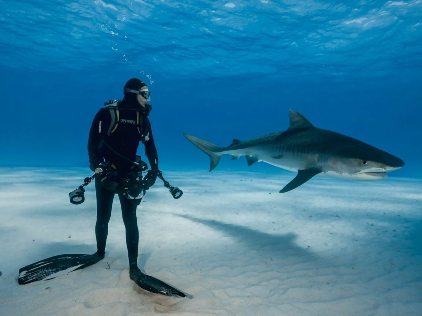 Sharks_Expo_ES~~~~~es~mux~~1.JPG
