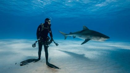 """Llega a Madrid la exposición """"Sharks de Brian Skerry"""" de National Geographic"""