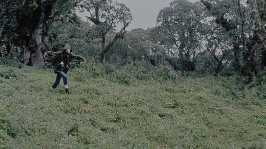 ¿Cómo ayudó Dian Fossey a los gorilas?