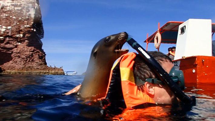 Imágenes de un encuentro con un lobo marino muy juguetón